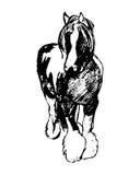 Das Pferd der Zählung (Suffolkdurchschlag) stock abbildung