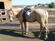 Das Pferd am einhängenden Beitrag stockbilder