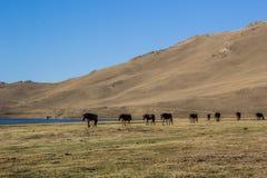 Das Pferd gehen entlang den See Lizenzfreie Stockbilder