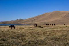 Das Pferd gehen entlang den See Lizenzfreies Stockbild