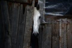 Das Pferd im Stall Stockfotos