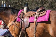Das Pferd mit Sattel Stockfoto
