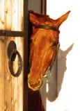 Das Pferd nahe dem Stall Stockfoto