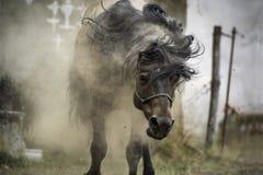 Das Pferd, das sein ganzes schmutzige und Staub nachdem Spaß rüttelt, auf dem Boden gehabt worden ist lizenzfreies stockfoto