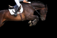 Das Pferd springend auf schwarzen Hintergrund Stockbilder