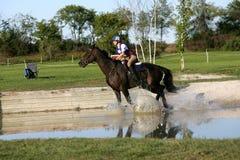 Das Pferd springend in ein Rennen Stockbild