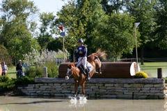 Das Pferd springend in ein Rennen Lizenzfreies Stockbild