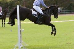 Das Pferden-Springen Stockbild