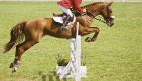 Das Pferdenspringen Stockbild