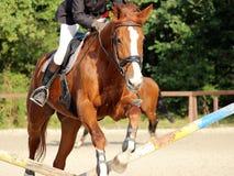 Das Pferdespringen Stockfoto