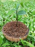 Das Pflanzen braucht nicht, irgendwie Taschen zu wachsen stockfotografie