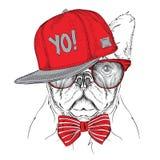Das Plakat mit dem Bildhundeporträt im roten und grauen Hip-Hop-Hut Auch im corel abgehobenen Betrag Lizenzfreies Stockfoto