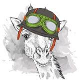 Das Plakat mit dem Porträt der Giraffe, die den Motorradsturzhelm trägt Auch im corel abgehobenen Betrag Lizenzfreie Stockfotos