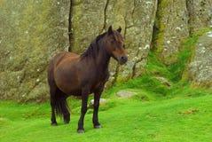 Das Pony Lizenzfreie Stockbilder