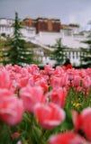 Das Potala-Palast und die Blumen Stockfotos