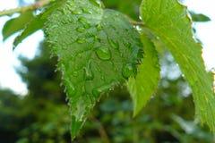 Das regnerische Blatt Lizenzfreie Stockfotos
