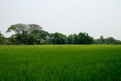 Das Reisfeld in Chiang Mai, Thailand stockfoto