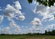 Das Reisfeld lizenzfreies stockbild
