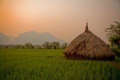 Das Reisgetreidefeld Stockfotos