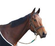 Das Rennpferd Stockbild