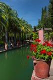 Das Rot blüht in den Tongefäßen und die Palmen ist auf der Bank des Reservoirs lizenzfreie stockfotos