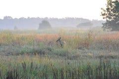 Das Rotwild steht auf dem Gebiet weiden lassend Stockfoto
