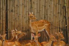 Das Rotwild wird in den Zoo gez?chtet lizenzfreie stockfotografie