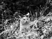 Das schöne Leben von Haustieren stockbilder