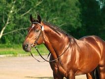 Das schöne Pferd Lizenzfreies Stockfoto