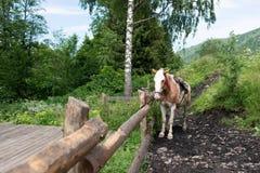 Das schöne Pferd gebunden an einem Zaun Lizenzfreies Stockfoto