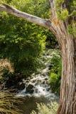 Das schöne und verschiedene Sedona Arizona Lizenzfreies Stockbild
