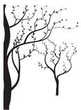 Das Schattenbild der Bäume Stockfotografie
