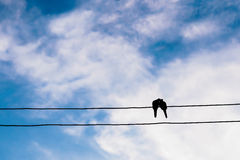 das Schattenbild des Vogels in der Liebe auf Stromleitung oder des Drahtes im Blau Lizenzfreie Stockbilder
