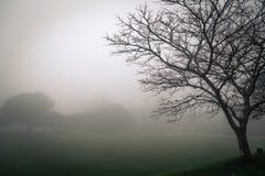 Das Schattenbild eines Baums mit Nebel auf dem Hintergrund lizenzfreies stockfoto