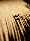 Das Schattenkätzchen Stockbilder