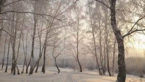Das Schieben unter Suppengrün im Schnee bedeckte Park am Wintertag stock footage