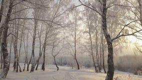 Das Schieben unter Suppengrün im Schnee bedeckte Park am Wintertag stock video