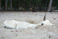 Das Schlafen der streunenden Hunde Lizenzfreies Stockfoto