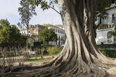 Das Schlendern durch die alten Straßen von Sevilla und heute judera Nachbarschaft nannte Santa Cruz stockbilder