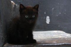 Das schwarze Kätzchen stockbild