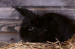 Das schwarze kleine Kaninchen Lizenzfreies Stockbild