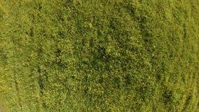 Das schwebende Brummen und dreht sich über ein grünes Feld mit Sommerkräutern und -blumen stock video footage