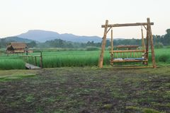 Das Schwingen für das Sitzen unter den Reisfeldern lizenzfreie stockfotos