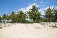 Das Seeufer mit Palmen Stockbilder