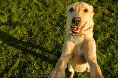 Das selfie des Hundes Lizenzfreies Stockbild