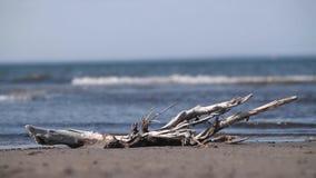 Das sibirische Ostmeer, Chukotka stock video footage