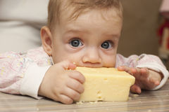 Siebenmonatliches Baby isst ein großes Stück Käse Lizenzfreie Stockfotografie