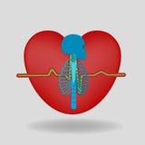 Das Skelett auf dem Hintergrund von Herzen Stockfotografie