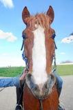 Das Sonderkommando des Kopfes des Tierpferds Lizenzfreie Stockfotografie
