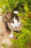 Das spanische Katzentragen bilden:) Stockfotografie